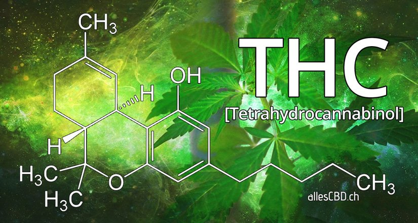 THC Guide