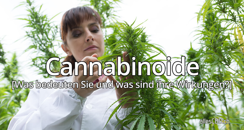 Cannabinoide 101