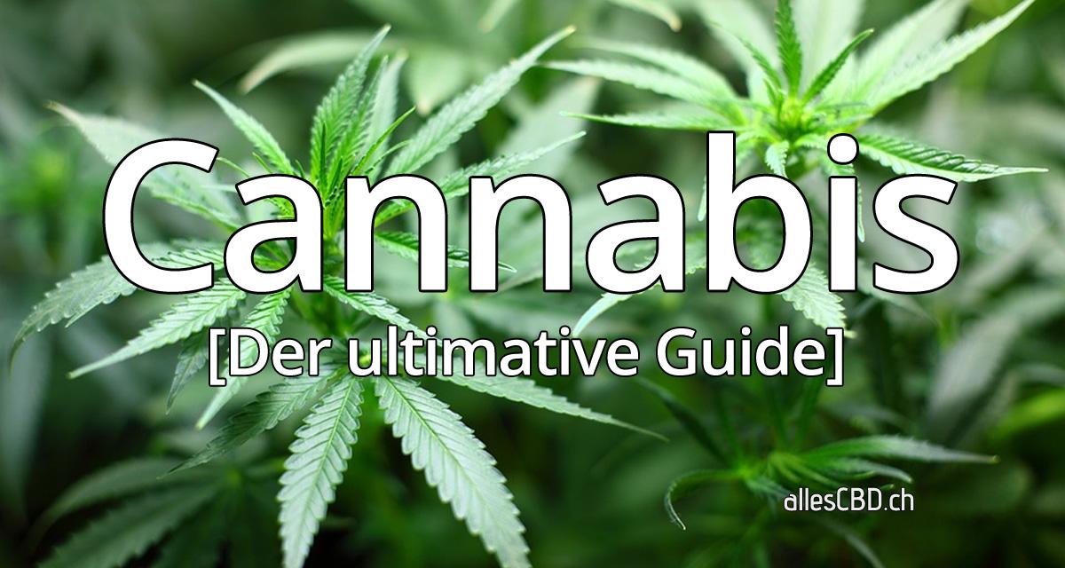 Cannabis Fakten